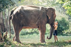 Обои Азиаты Слоны Траве Мальчики Две Животные Дети
