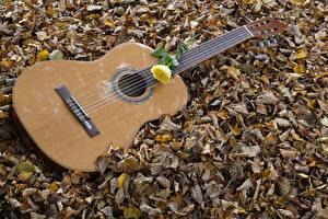 Фото Осенние Розы Гитара Листва