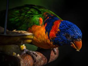 Фотографии Птицы Попугаи Клюв