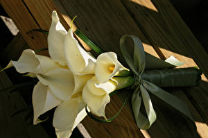 Фотография Букеты Белокрыльник Белый Бантик Цветы