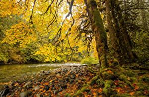 Фото Канада Парки Речка Осенние Камни Ствол дерева Мох Листья Vancouver Island Parks Природа