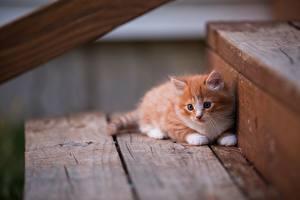 Фотографии Коты Котята Рыжий Лестница