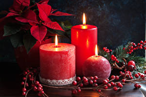 Фотографии Рождество Свечи Ягоды Молочай Втроем