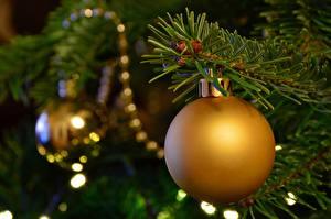 Фото Рождество Вблизи Ветвь Новогодняя ёлка Шар