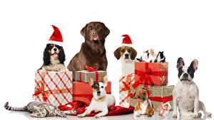Обои Рождество Собаки Коты Кролики Белый фон Подарки Ретривер Бигль Спаниель Бульдог Шар Шапки