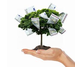 Фото Креатив Деньги Банкноты Евро Белый фон Руки Деревья