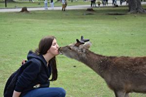 Обои Олени Двое Трава Поцелуй Брюнеток С рогами животное Девушки