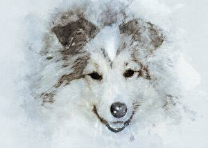 Фото Собаки Рисованные Морда Смотрит Шелти шетландская овчарка Животные