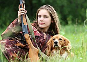 Фото Собаки Ружьё Шатенка Трава Взгляд Охота Животные