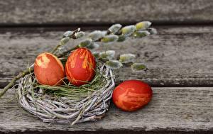 Обои Пасха Доски Гнездо Яйца Ветки Природа картинки