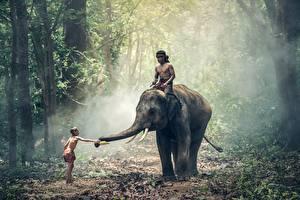 Обои Слоны Азиаты Леса Мужчины Мальчики Животные картинки