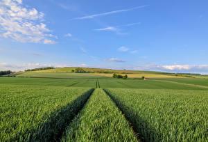 Фотографии Англия Поля Небо Природа