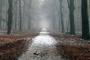 Фотографии Лес Осень Дороги Деревья Лист Тумане
