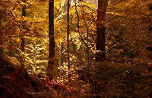 Фото Леса Осень Деревья