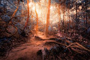 Обои Леса Осенние Ствол дерева jungle