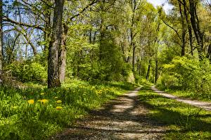 Фотографии Лес Дороги Лето Траве Деревья Природа