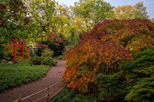 Картинка Германия Парки Осенние Кусты Karlsruhe