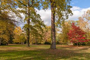 Обои Германия Парки Осенние Деревья Karlsruhe Природа