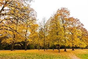 Картинки Германия Парки Осень Деревья Листва Karlsruhe