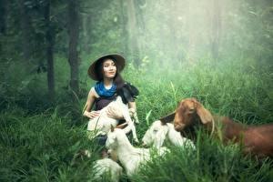 Обои Коза козел Азиаты Трава Шляпа Брюнетка Животные Девушки