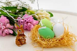 Фотография Зайцы Пасха Гнездо Яйца