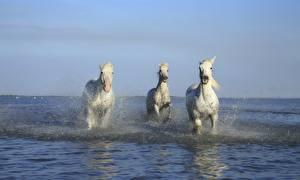 Фото Лошади Трое 3 Белый Брызги Животные