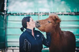 Картинка Лошади 2 Брюнетка Поцелуй Животные Девушки