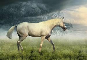 Обои Лошади Белый Трава Животные