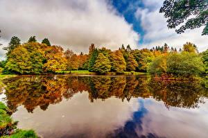 Фотографии Ирландия Парки Пруд Осенние Деревья Botanic Gardens Dublin