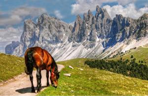 Обои Италия Лошади Горы Альпы Тропа Трава Скала South Tyrol Природа