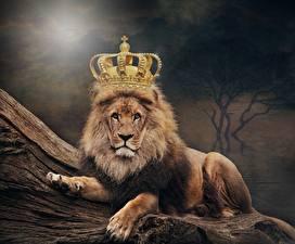Картинка Львы Корона животное