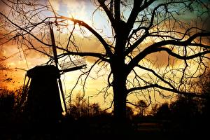 Фотография Ветряная мельница Дерево Ветвь Силуэта Природа
