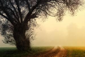Фотография Утро Осенние Дороги Туман Дерево Трава Природа
