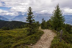 Картинки Горы Леса Пейзаж Тропинка Ель Трава Природа