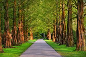 Фото Дороги Лето Аллеи Дерево Траве Природа