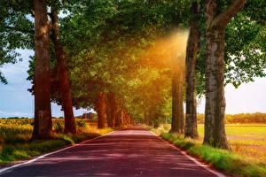 Фото Дороги Деревья Лучи света Трава Асфальт Природа