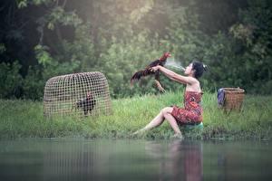 Картинки Петух Азиаты Трава Брызги Брюнетка Сидящие