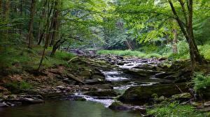 Фотографии Камень Леса Штаты Речка Ручей Мох West Virginia, Monongahela river