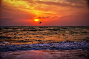 Картинки Рассветы и закаты Море Птицы Волны Природа