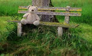 Фотография Плюшевый мишка Трава Скамейка Сидящие