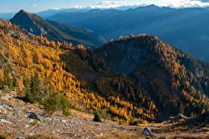 Картинка США Горы Осень Лес Вашингтон Carne Mountain Природа