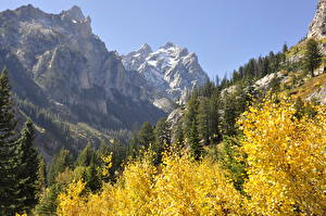 Картинки США Горы Осенние Леса Парки Скала Grand Teton National Park, Wyoming Природа