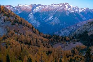 Фото Штаты Горы Леса Осенние Вашингтон Carne Mountain Природа
