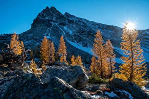 Фотография Штаты Горы Рассветы и закаты Осенние Вашингтон Деревья Снег Солнце