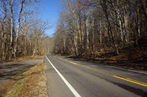 Картинки Штаты Дороги Осень Асфальт Деревьев Shenandoah National Park, Virginia Природа