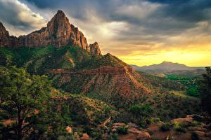 Фото Штаты Зайон национальнай парк Парки Утес Ветвь Кусты Природа