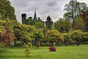 Обои Великобритания Парки Деревья Кусты Трава Bute Park  Cardiff Природа
