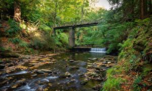 Фотография Великобритания Река Мосты Осень Деревьев River Neb Природа