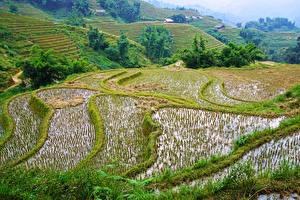 Обои Вьетнам Поля Muong Hoa Valley Природа