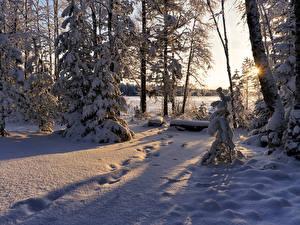 Фото Зимние Снег Деревья Ель Лучи света Природа